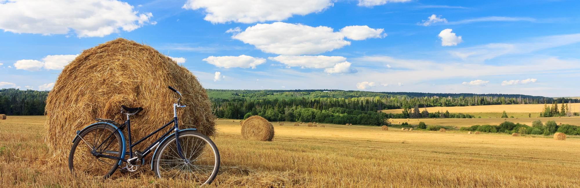 cereal field and bicycle